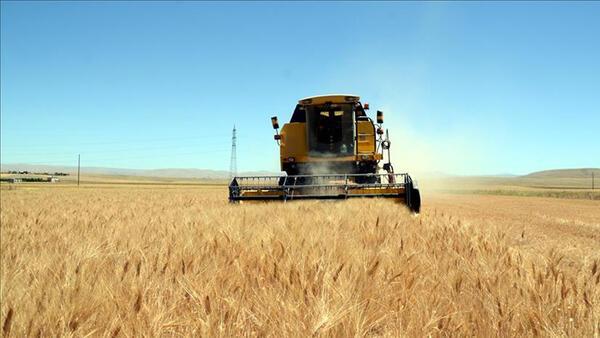 Küresel hububat üretiminde en fazla soya fasulyesinde artış bekleniyor