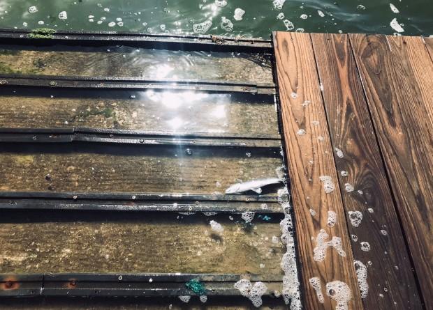 İzmir Körfezi'nde ölü balıklar korkuttu! Sahile vurdular