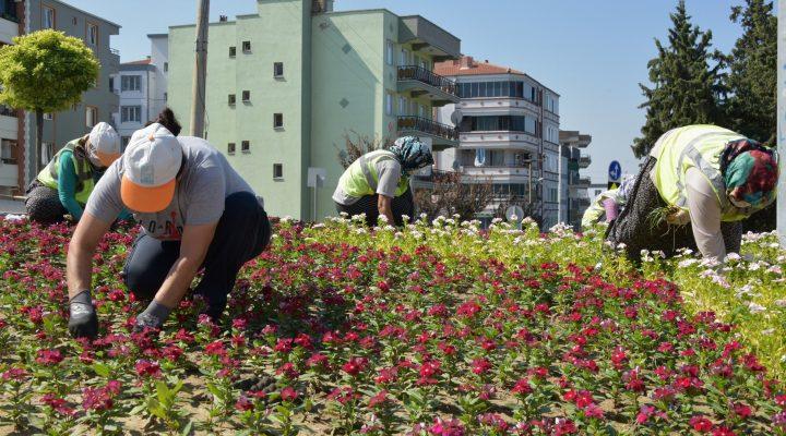 Aliağa Mevsimlik Çiçeklerle Renkleniyor